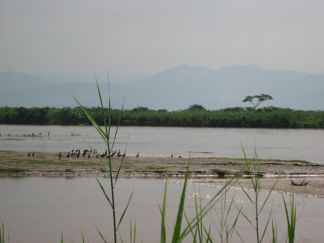 Rusizi National Park Bujumbura Burundi Blog Information