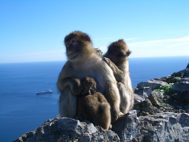 Rock of Gibraltar monkeys Trip Photo