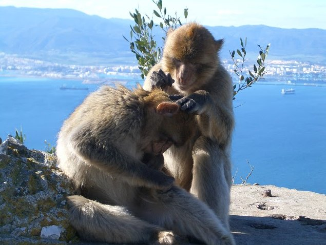 Photo Rock of Gibraltar monkeys southern
