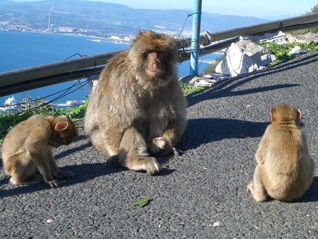 Photo Rock of Gibraltar monkeys peninsula