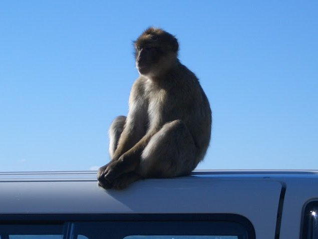 Rock of Gibraltar monkeys Blog