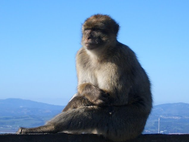 Photo Rock of Gibraltar monkeys national