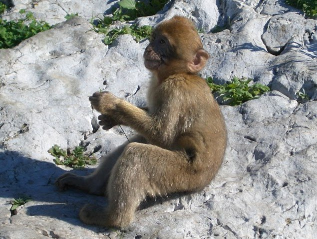 Photo Rock of Gibraltar monkeys symbol