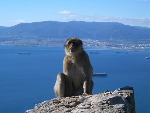 Photo Rock of Gibraltar monkeys monkeys