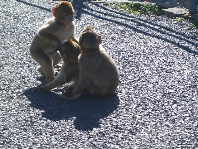 Photo Rock of Gibraltar monkeys overlooking