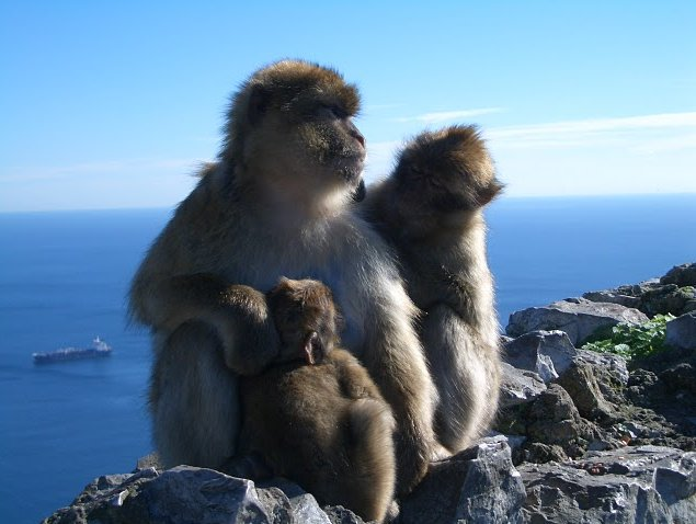 Photo Rock of Gibraltar monkeys tourists