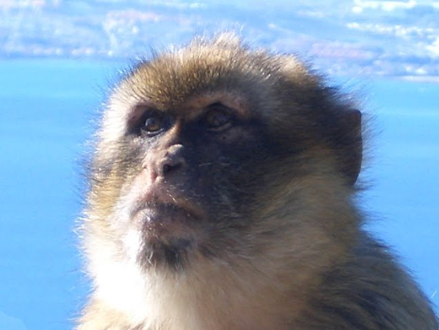 Rock of Gibraltar monkeys Story Sharing