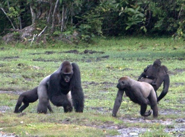 Pictures of Odzala National Park Ewo Republic of the Congo Blog Adventure