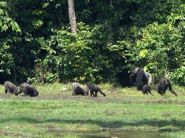 Pictures of Odzala National Park Ewo Republic of the Congo Diary Photos