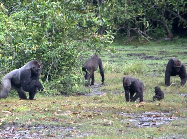 Pictures of Odzala National Park Ewo Republic of the Congo Vacation Adventure