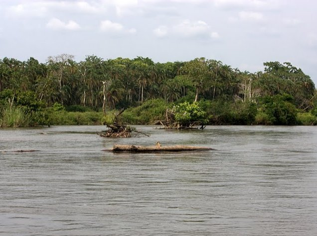 Pictures of Odzala National Park Ewo Republic of the Congo Review Picture