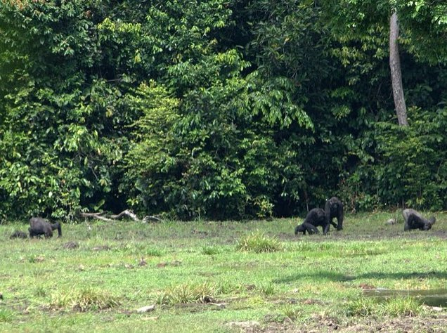 Pictures of Odzala National Park Ewo Republic of the Congo Travel Information
