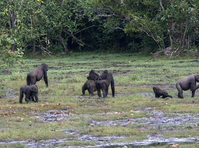 Pictures of Odzala National Park Ewo Republic of the Congo Story Sharing