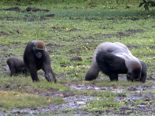 Pictures of Odzala National Park Ewo Republic of the Congo Vacation Tips