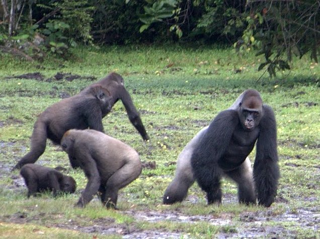 Pictures of Odzala National Park Ewo Republic of the Congo Travel Package