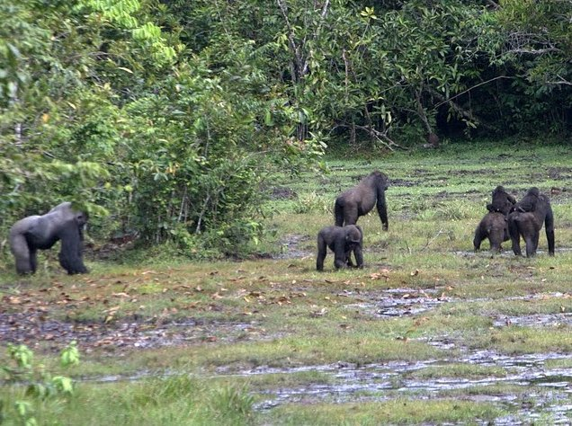Photo Pictures of Odzala National Park remaining