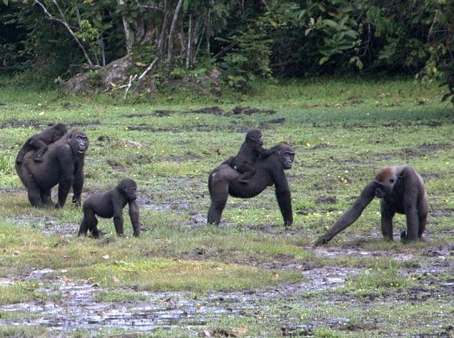 Pictures of Odzala National Park Ewo Republic of the Congo Holiday Photos