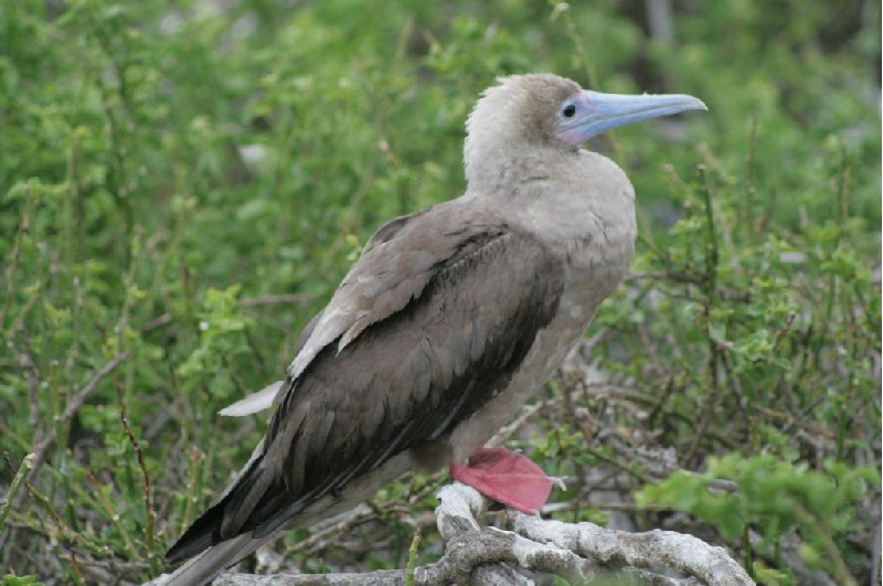 Galapagos Islands Ecuador Trip Photo