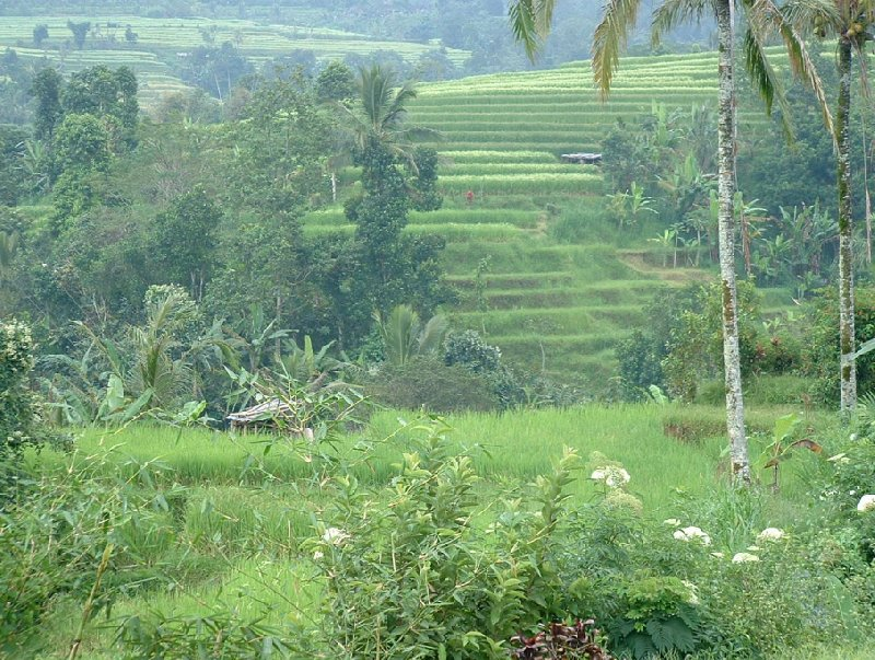 Holiday in Bali Denpasar Indonesia Blog Review