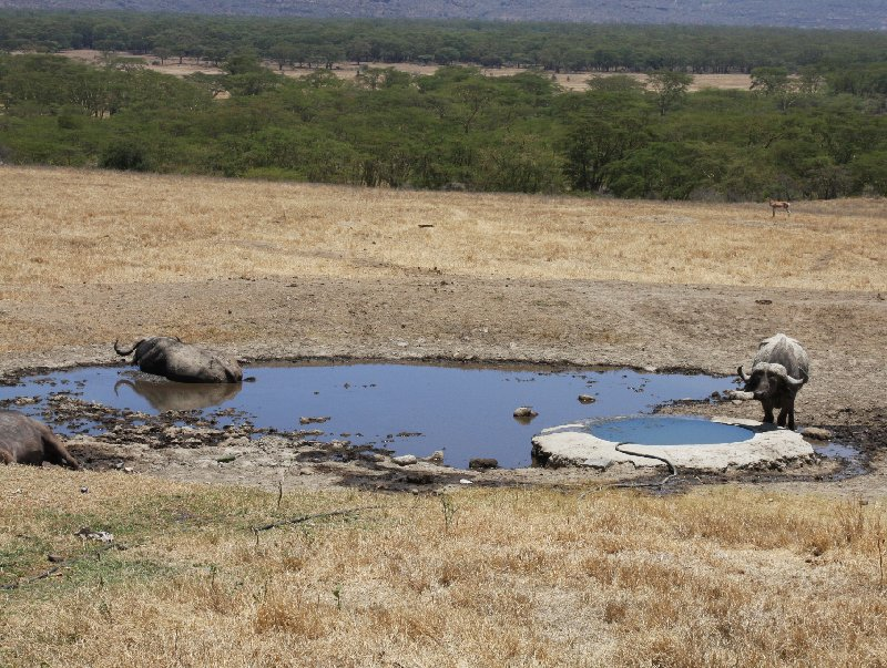 Kenya safari packages Amboseli Blog Picture