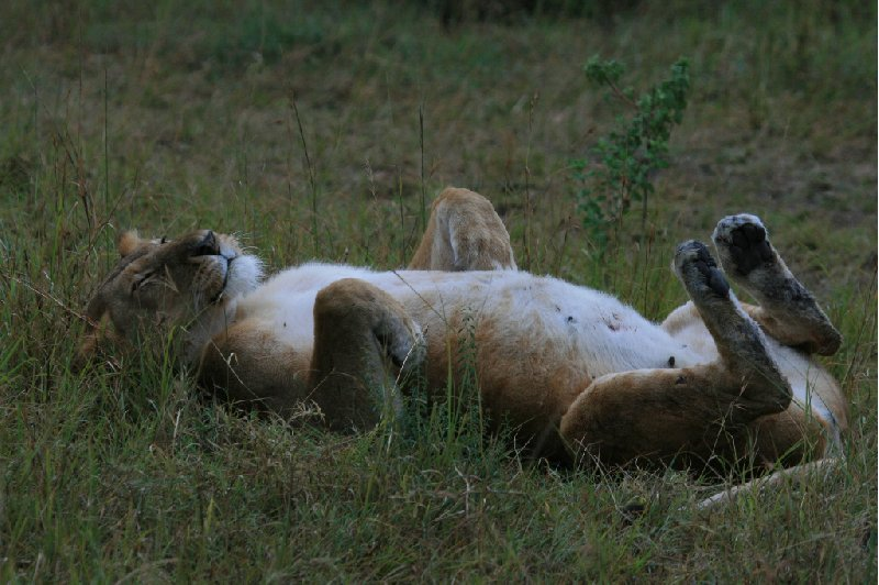 Kenya safari packages Amboseli Review