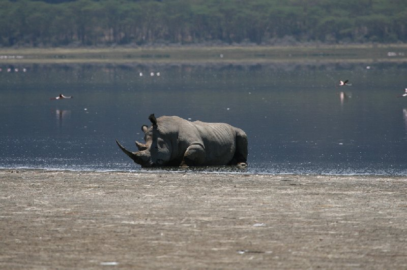 Kenya safari packages Amboseli Album Pictures