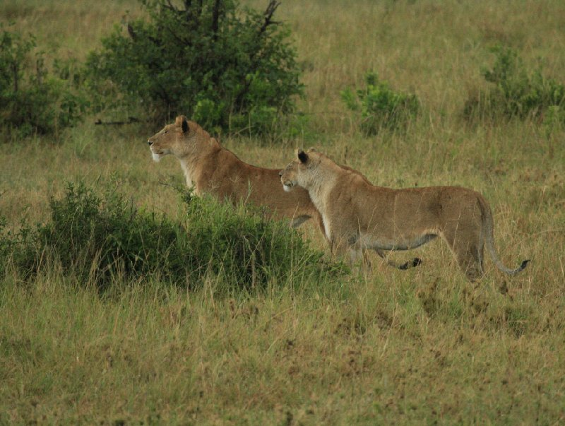 Kenya safari packages Amboseli Travel Package