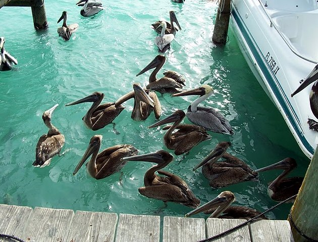Florida Keys United States Diary Sharing