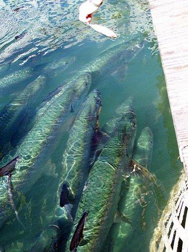 Florida Keys United States Photo Gallery
