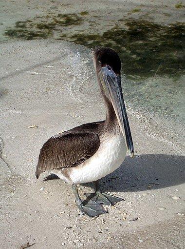 Florida Keys United States Trip Photos