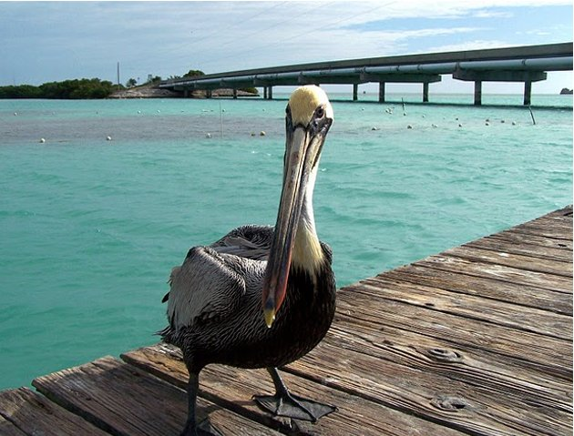 Florida Keys United States Diary