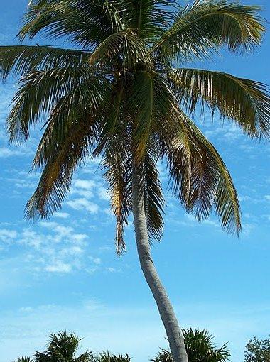 Photo Romantic getaway in Florida Resort