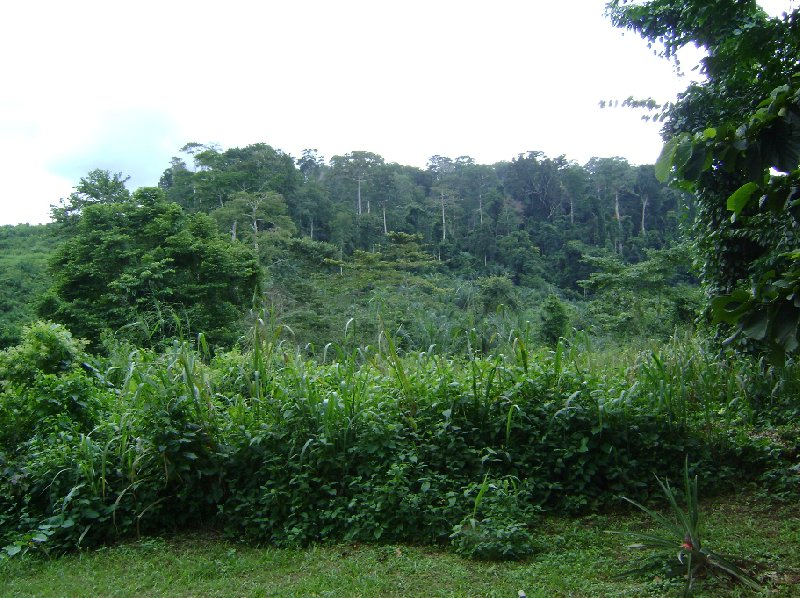 Kakum National Park Cape Coast Ghana Diary Photo