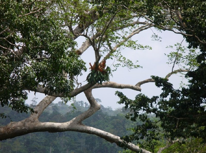 Kakum National Park Cape Coast Ghana Travel Diary