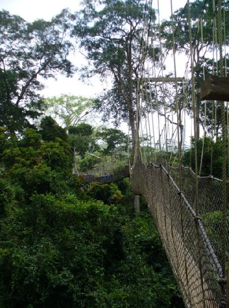 Kakum National Park Cape Coast Ghana Picture Sharing