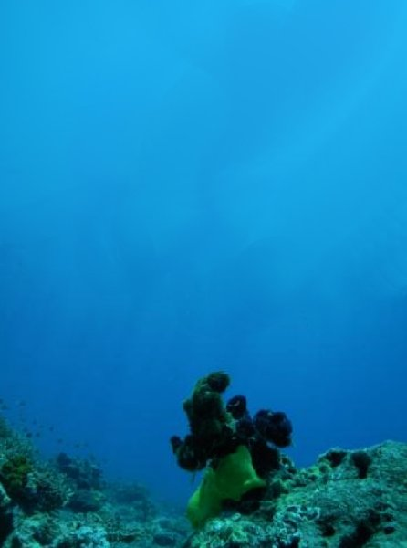 Photo Fiji diving resorts difficult