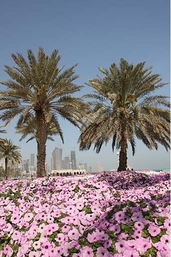 Things to do in Doha Qatar Album Photographs