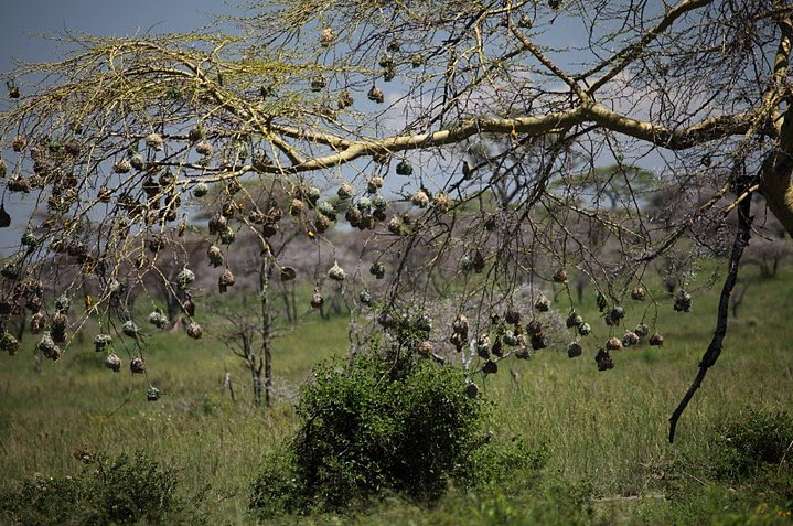 Balloon safari Serengeti Karatu Tanzania Picture gallery