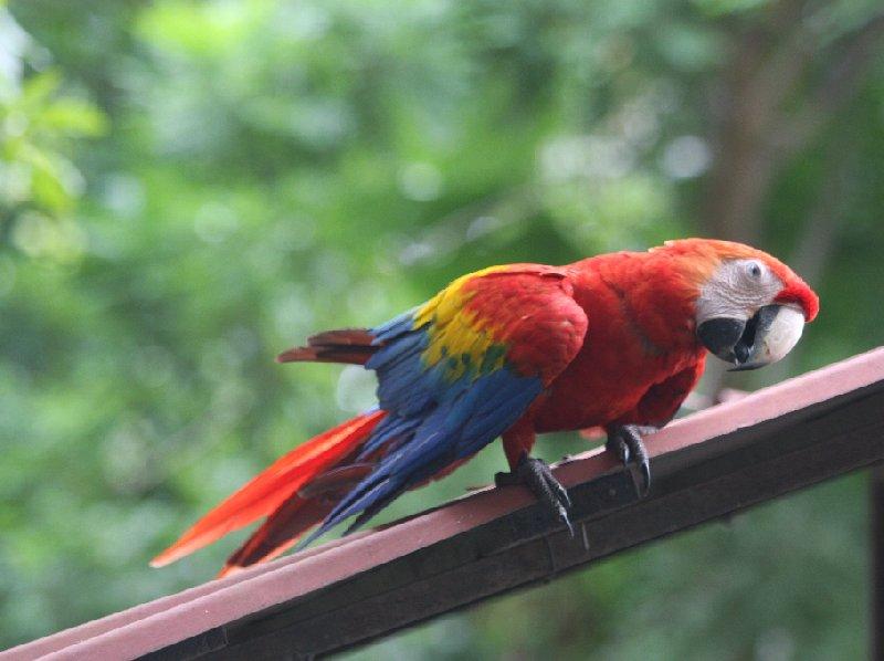 Arenal Volcano National Park Laguna de Arenal Costa Rica Trip Photos