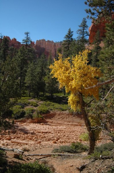 Photo Bryce Canyon National Park arches