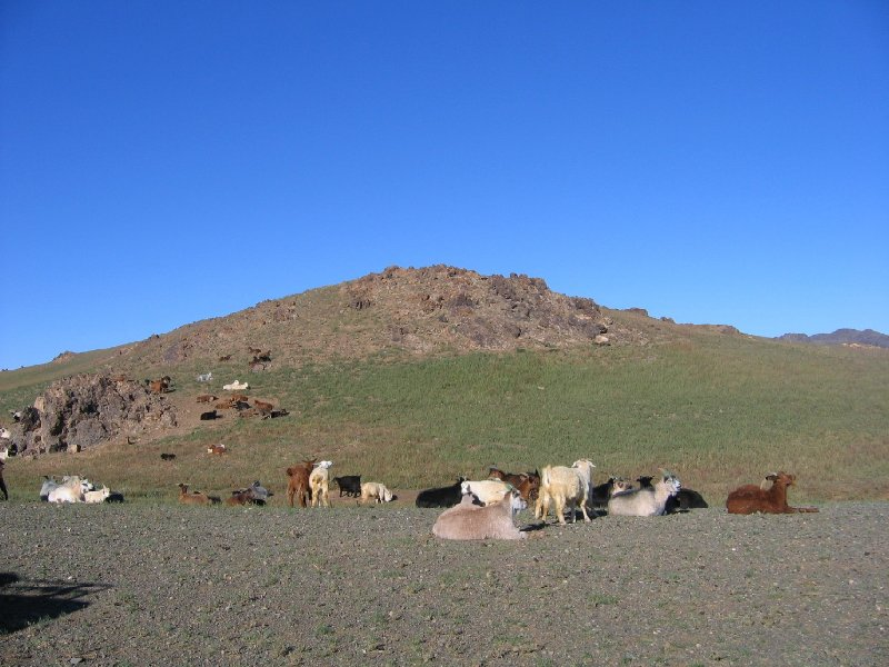 The Gobi Desert in Mongolia Kharkhorin Diary Tips