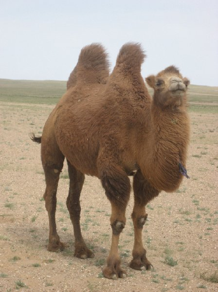 The Gobi Desert in Mongolia Kharkhorin Travel Album