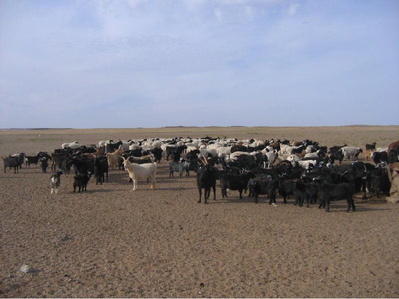 Photo The Gobi Desert in Mongolia resist