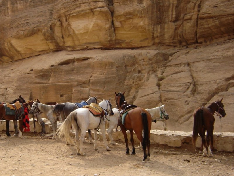 Petra and Wadi Rum tours Jordan Vacation Photos