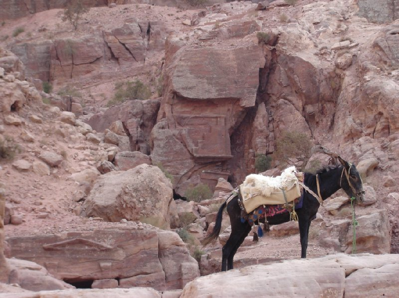 Petra and Wadi Rum tours Jordan Holiday Photos