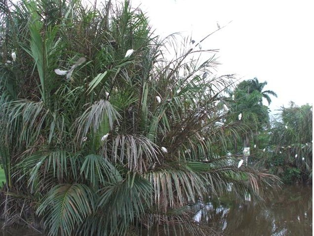 Georgetown's Botanical Gardens Guyana Holiday Tips