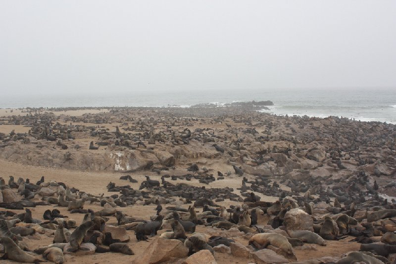 Cape Cross seal reserve Namibia Picture