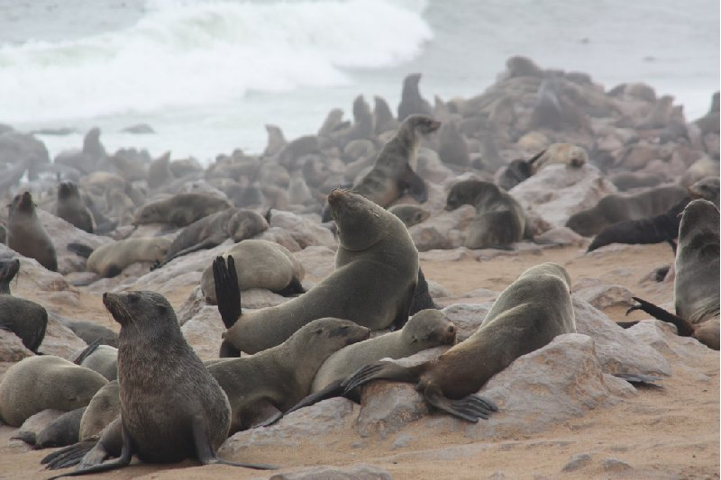 Cape Cross seal reserve Namibia Photograph