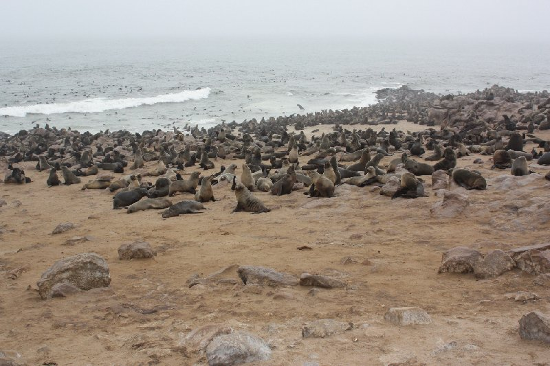 Cape Cross seal reserve Namibia Blog