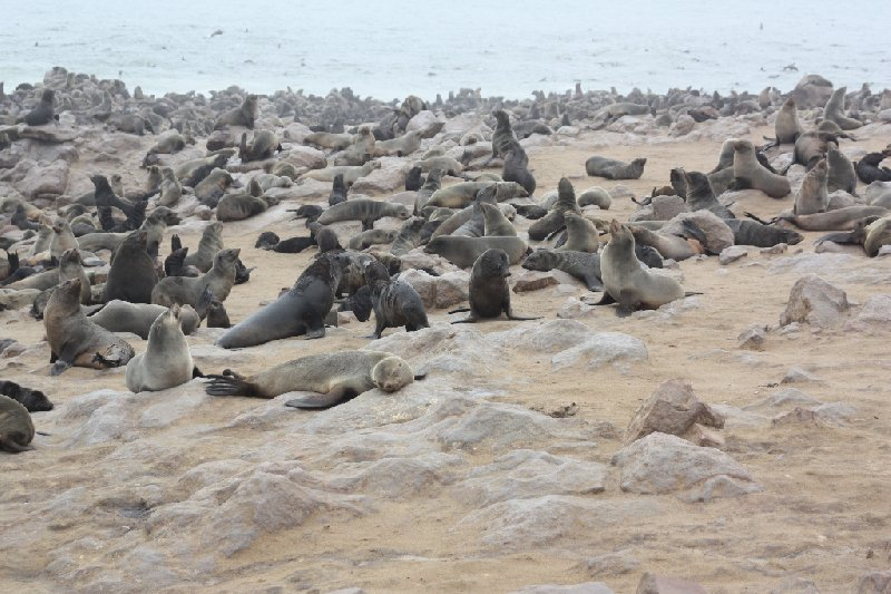 Cape Cross seal reserve Namibia Photo Sharing